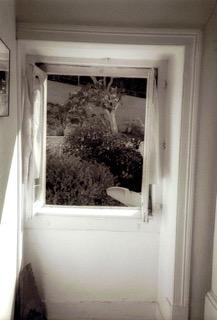 Window - leaf.jpeg